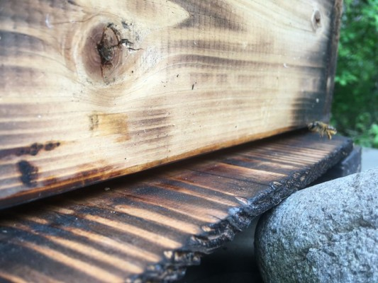 200524№3の箱へニホンミツバチの入居を確認